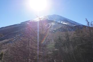 Sunny Fuji